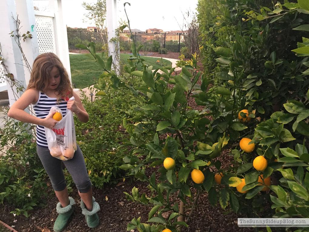 picking-lemons