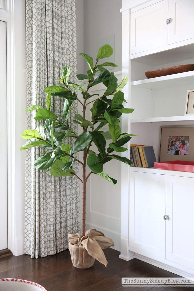 pottery-barn-fiddle-leaf-fig