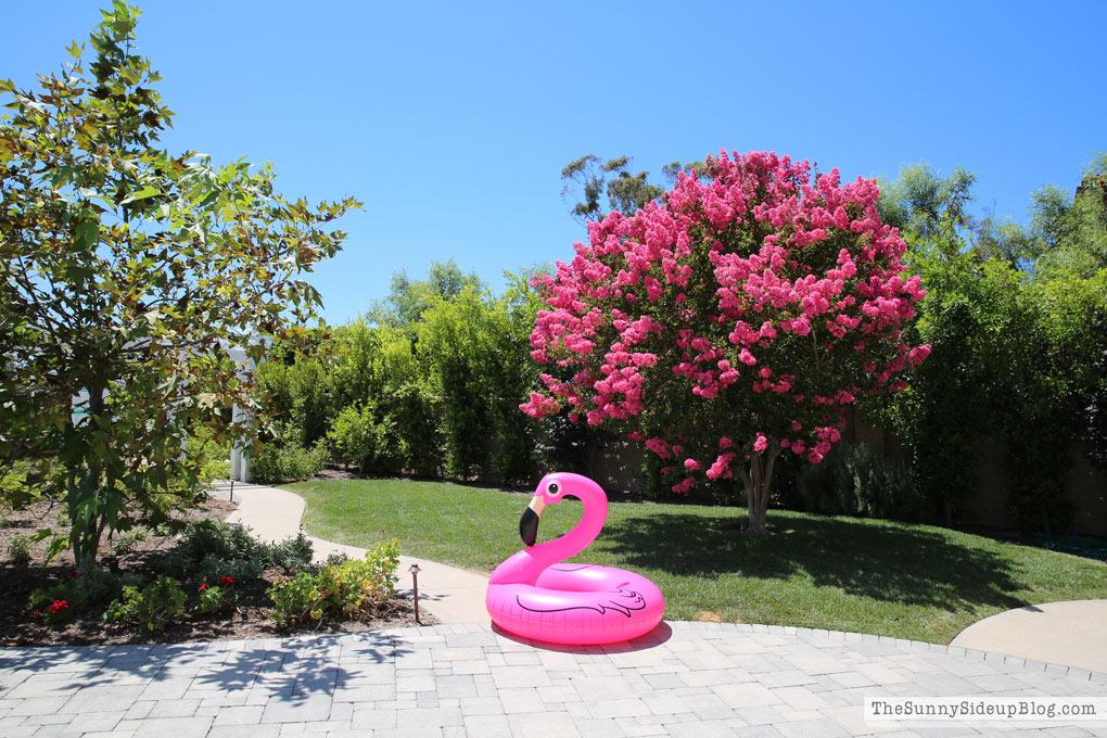 pink-crape-myrtle-tree