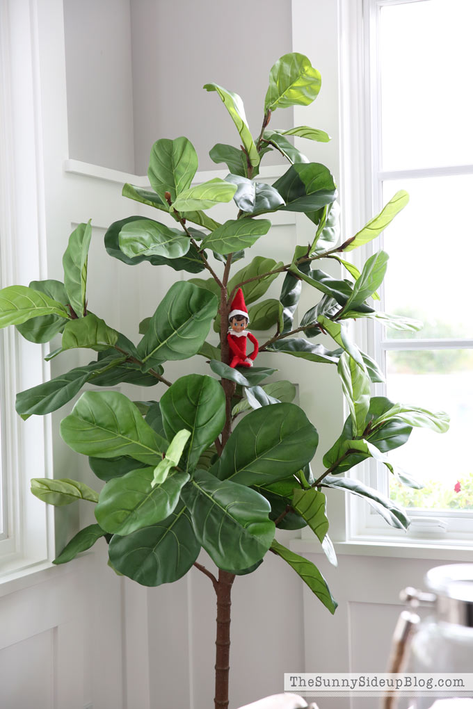 faux-fiddle-leaf-fig