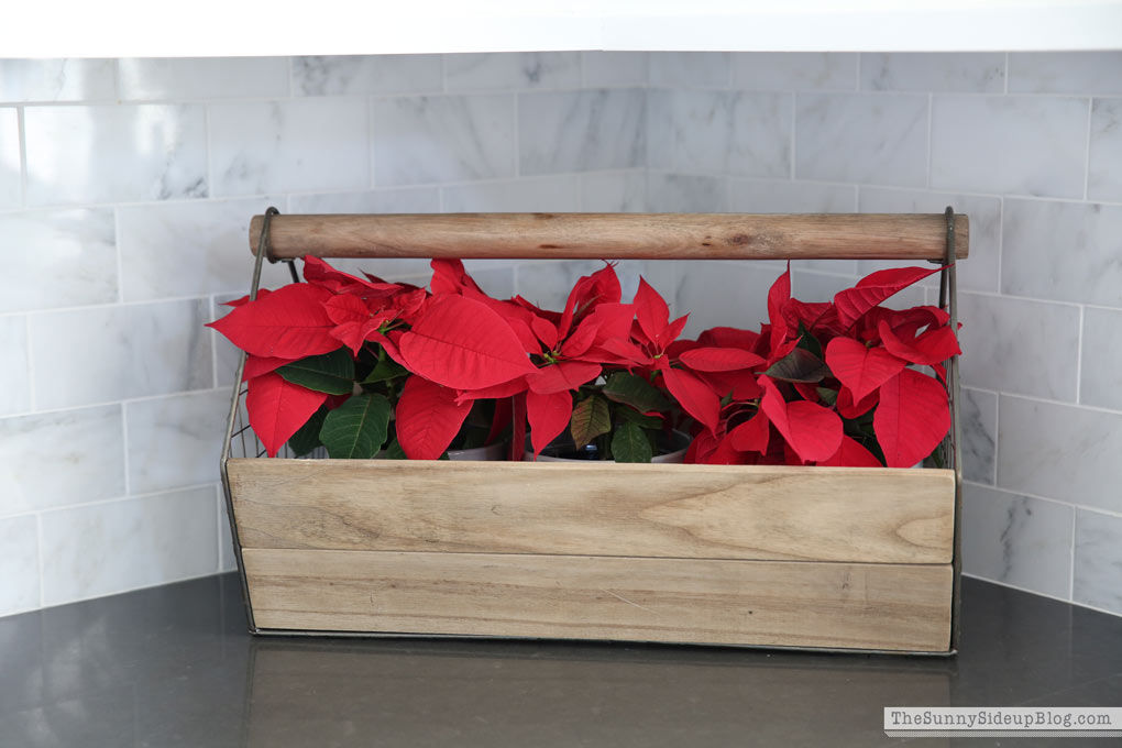 poinsettas-in-wooden-box