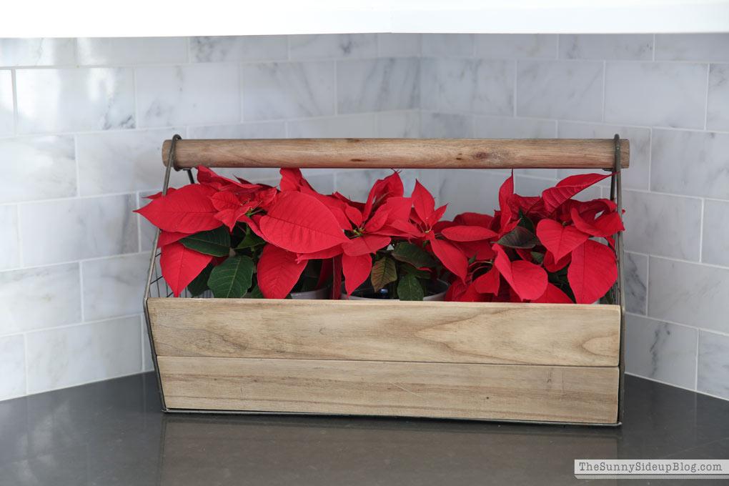 poinsettas-in-wooden-box