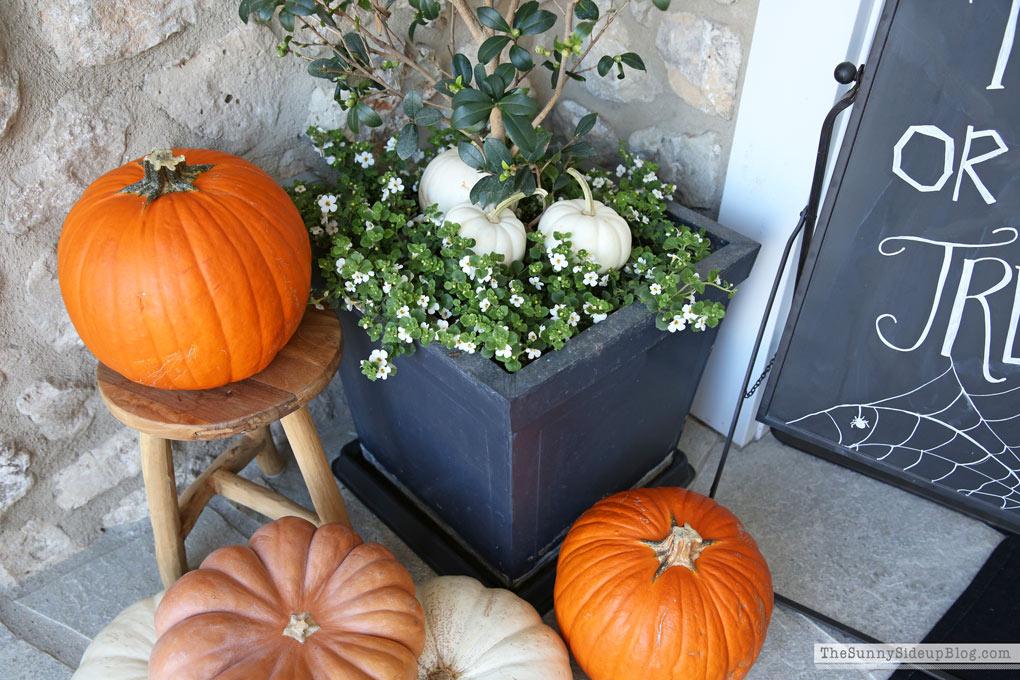 Halloween Porch Decor (Sunny Side Up)
