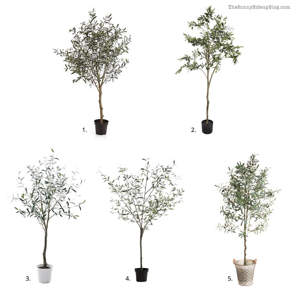 Favorite Fig trees (Sunny Side Up)